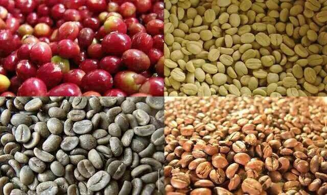 Mocha Coffee Beans Wholesale Price Bulk Buy Coffee Beans Green